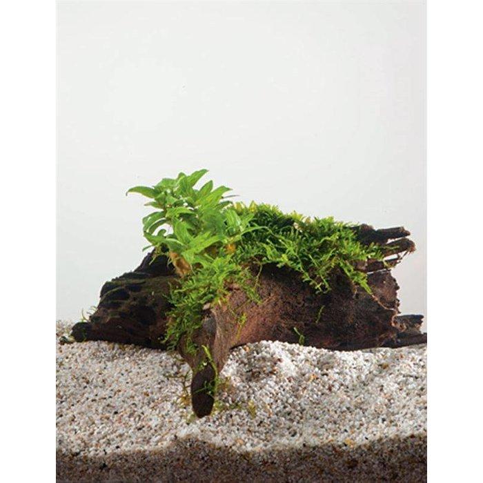 Driftwood small met staurogine (verpakt per 1 stuks) 91583