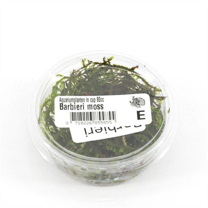 Barbieri moss (emballé par 3 pièces) 91654
