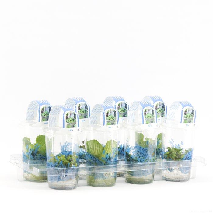 Drijf en zuurstof planten in plastic beker