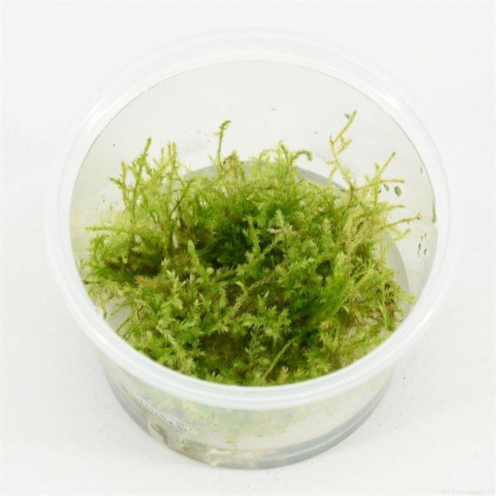 Christmas moss  (emballé par 3 pièces) 91640