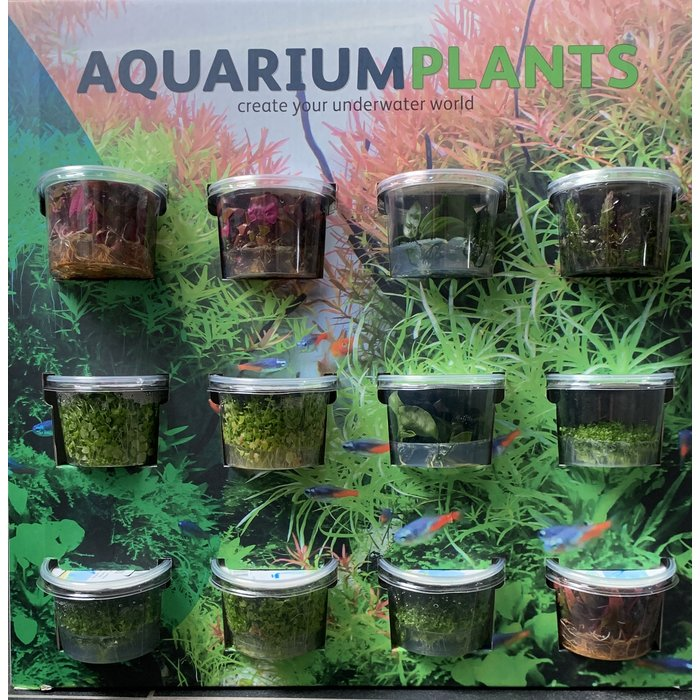 Aquascaping display Incl MIX 100cc cups 91315