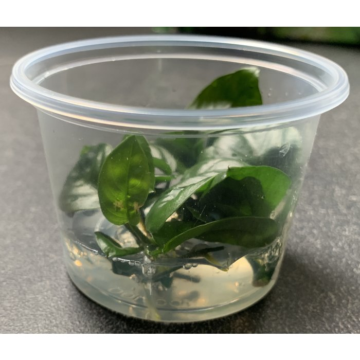 Aquascaping display Incl  MIX100cc cups 91315