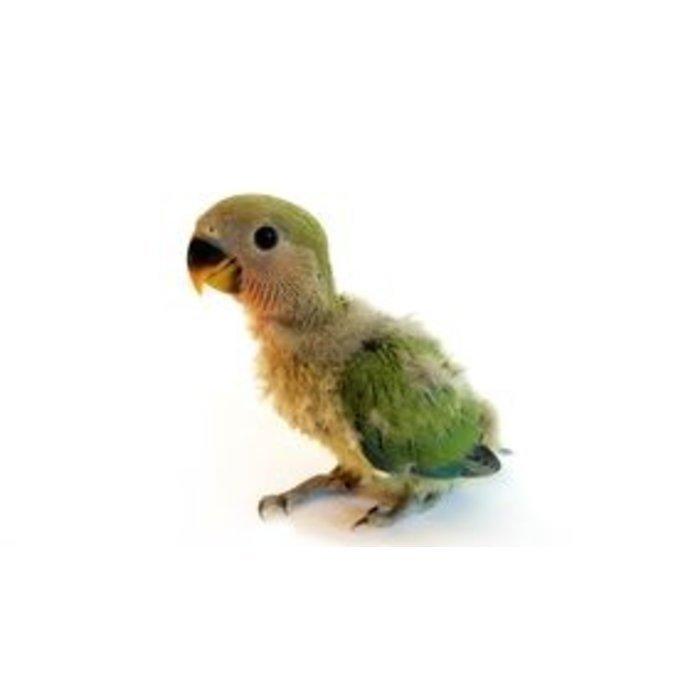 Handgevoerde vogels