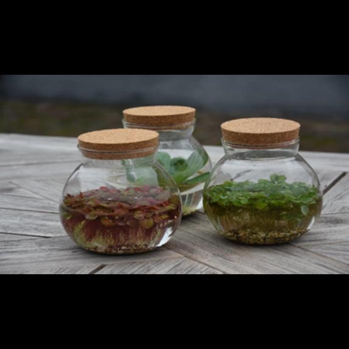 Ronde mini vijver vaas met kurken deksel (20855) per 5 stuks