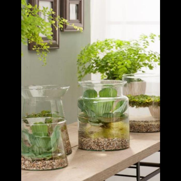 Vijvervaas mix met drijfplanten in luxe verpakking (20710) per 6 stuks