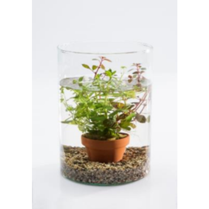 Mélange de vase d'étang avec des plantes d'aquarium (20715) par 6 pièces
