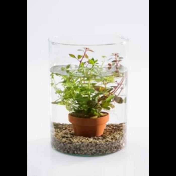 Vijvervaas mix met aquariumplanten (20715) per 6 stuks