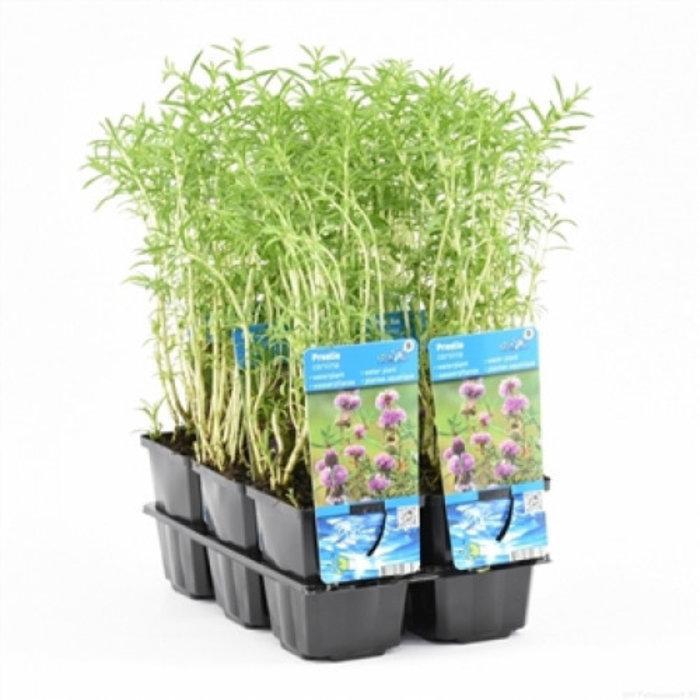 plantes dans un pot de 9 cm