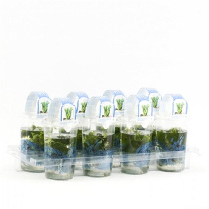 bouquete mix Cup medium (emballé par 8 pièces) 11700