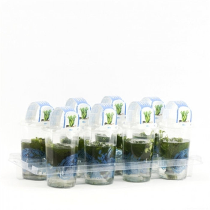 zuurstof planten mix Cup medium (verpakt per 8 stuks) 11710