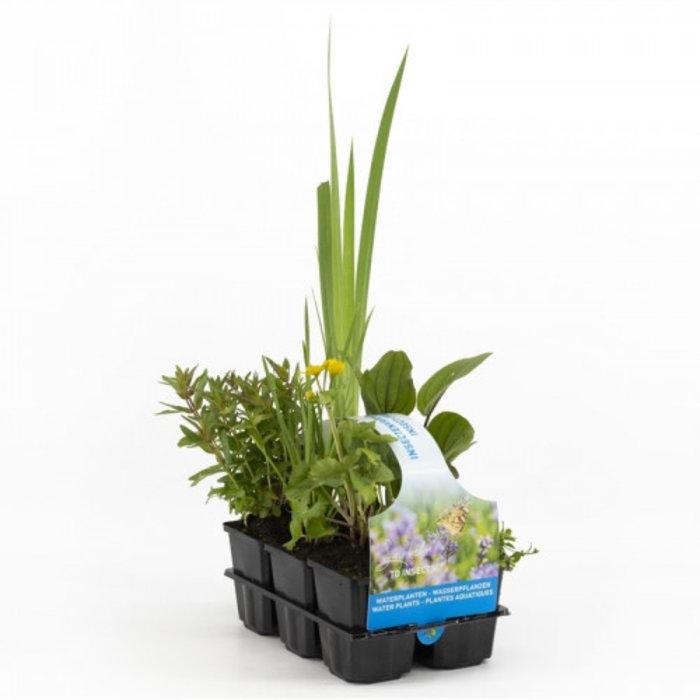 Plantes a insectes en pack de six (emballé par 6 pièces) 30035