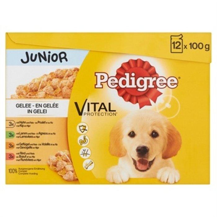 Pedigree multipack maaltijdzakjes junior in gelei