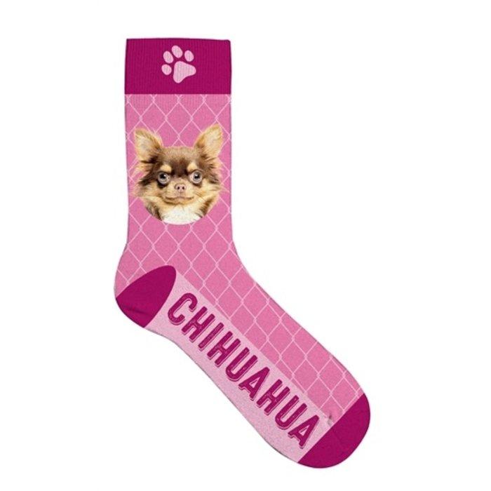 Sokken chihuahua
