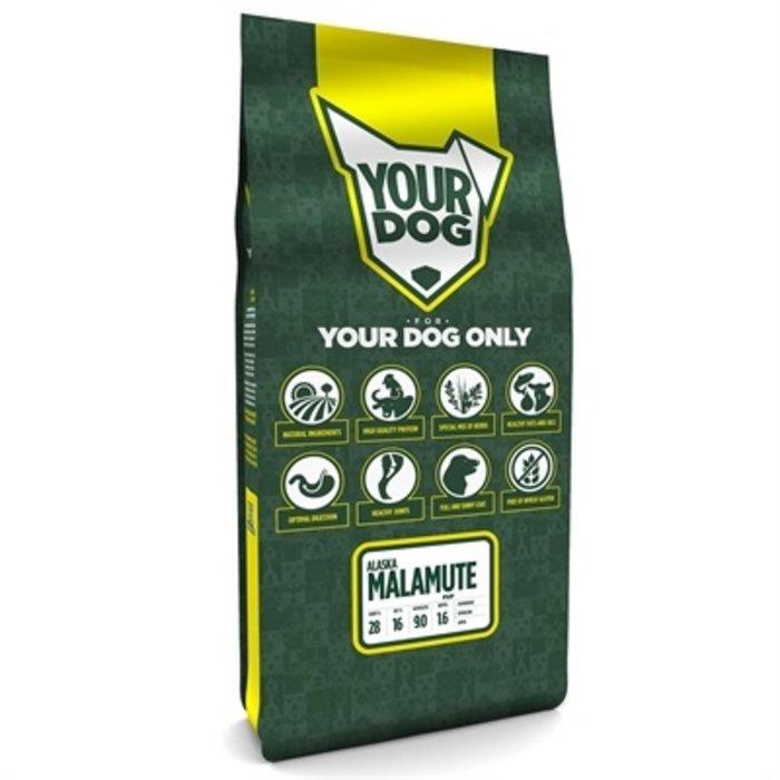 Yourdog alaska malamute pup