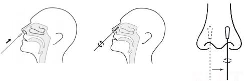 wattenstaaf in neus bij zelftest