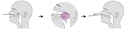 goedgekeurde coronatest neusholte