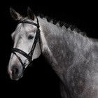 Greenfield Selection 706/Q1 - Bridle with wide combined noseband - cow leather excl. reins