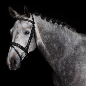 706/Q1 - Bridle with wide combined noseband - cow leather
