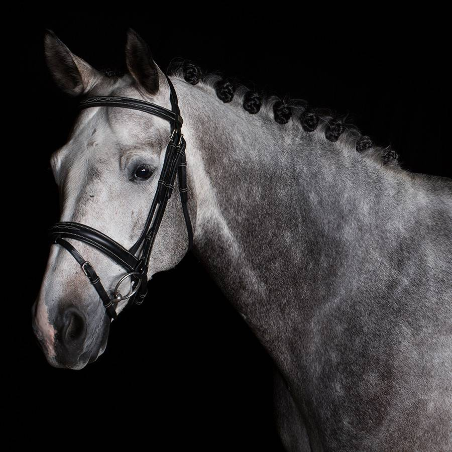 Greenfield Selection 706/Q2 - Bridle with wide flash noseband - calf leather excl. reins