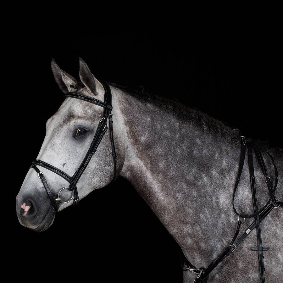 Greenfield Selection 717/Q1 - Bridle with flash noseband - cow leather excl. reins