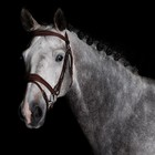 Greenfield Selection 740/Q1 - Bridle with flash noseband - cow leather excl. reins