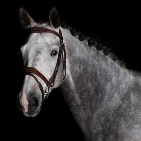 740/Q1 - Bridle with flash noseband- cow leather