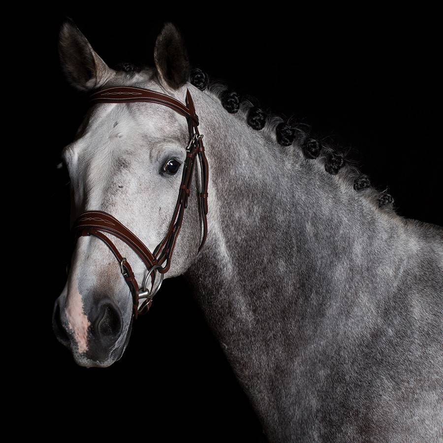 Greenfield Selection 740/Q2 - Bridle with wide noseband - calf leather excl. reins