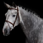 Greenfield Selection 770/Q1 - Bridle with flash noseband - cow leather excl. reins