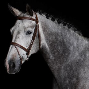 770/Q1 - Bridle with flash noseband - cow leather