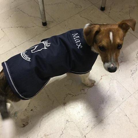 Embroidery – Dogrug
