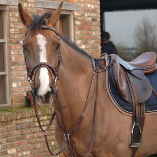 Greenfield Selection 69INL/Q1 - Breastplate - cow leather
