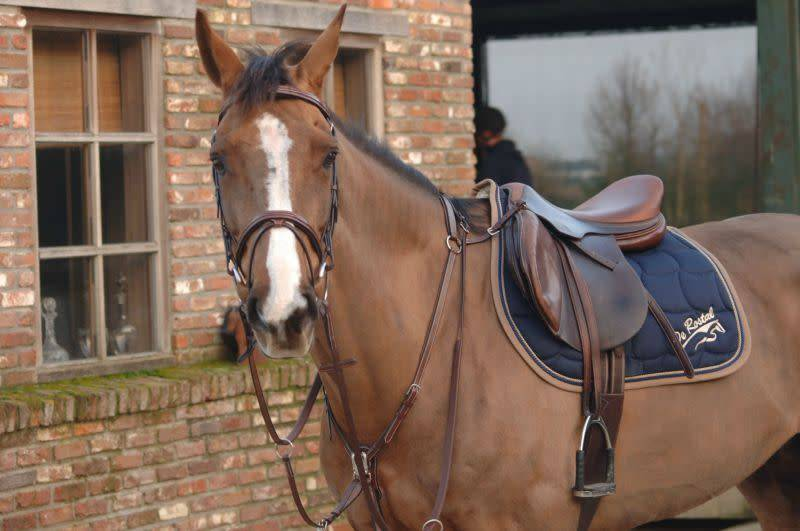 Greenfield Selection 69INL/Q1 - Breastplate