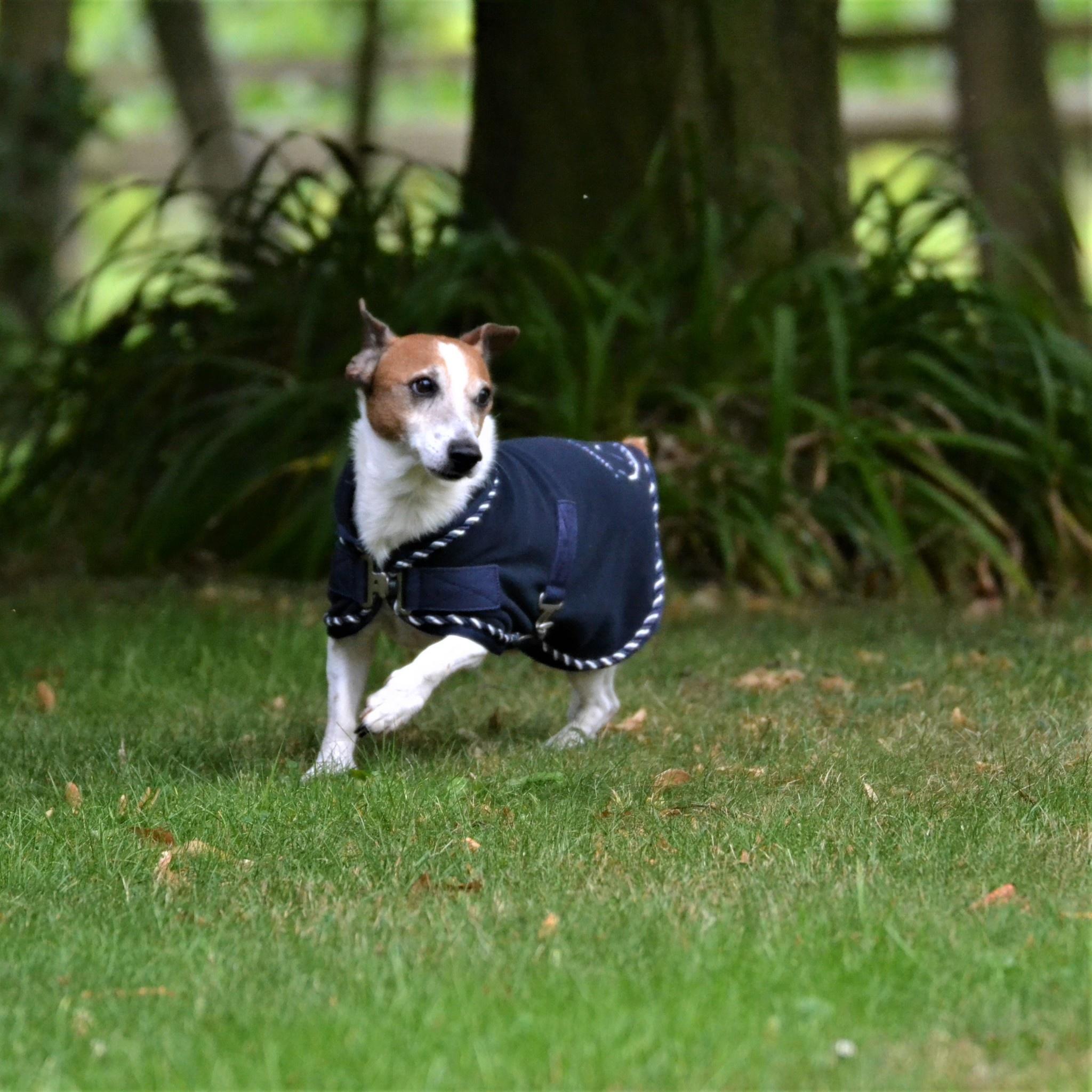Greenfield Selection Manteau pour chien en polaire - bleu marine