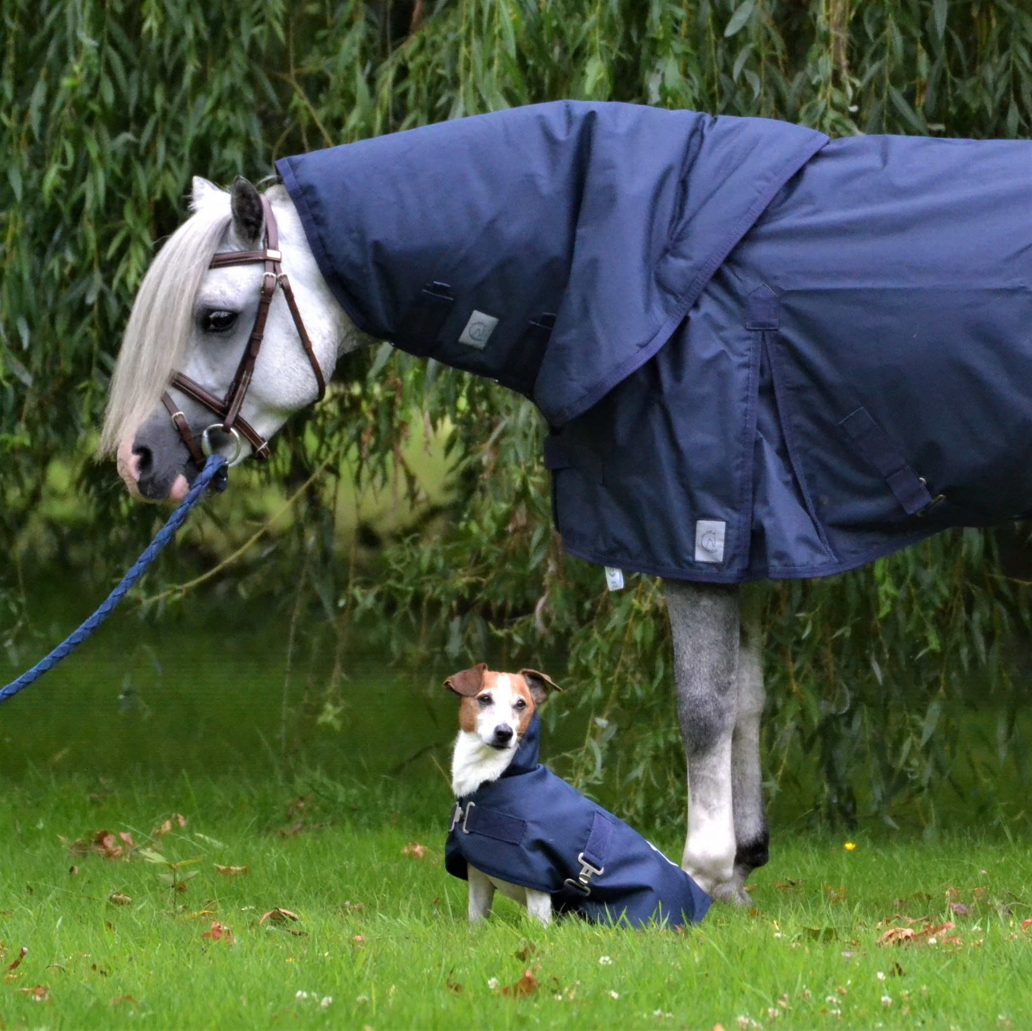 Greenfield Selection Dog turnout rug  - navy