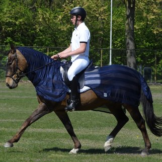 Greenfield Selection C11 - Fly riding sheet