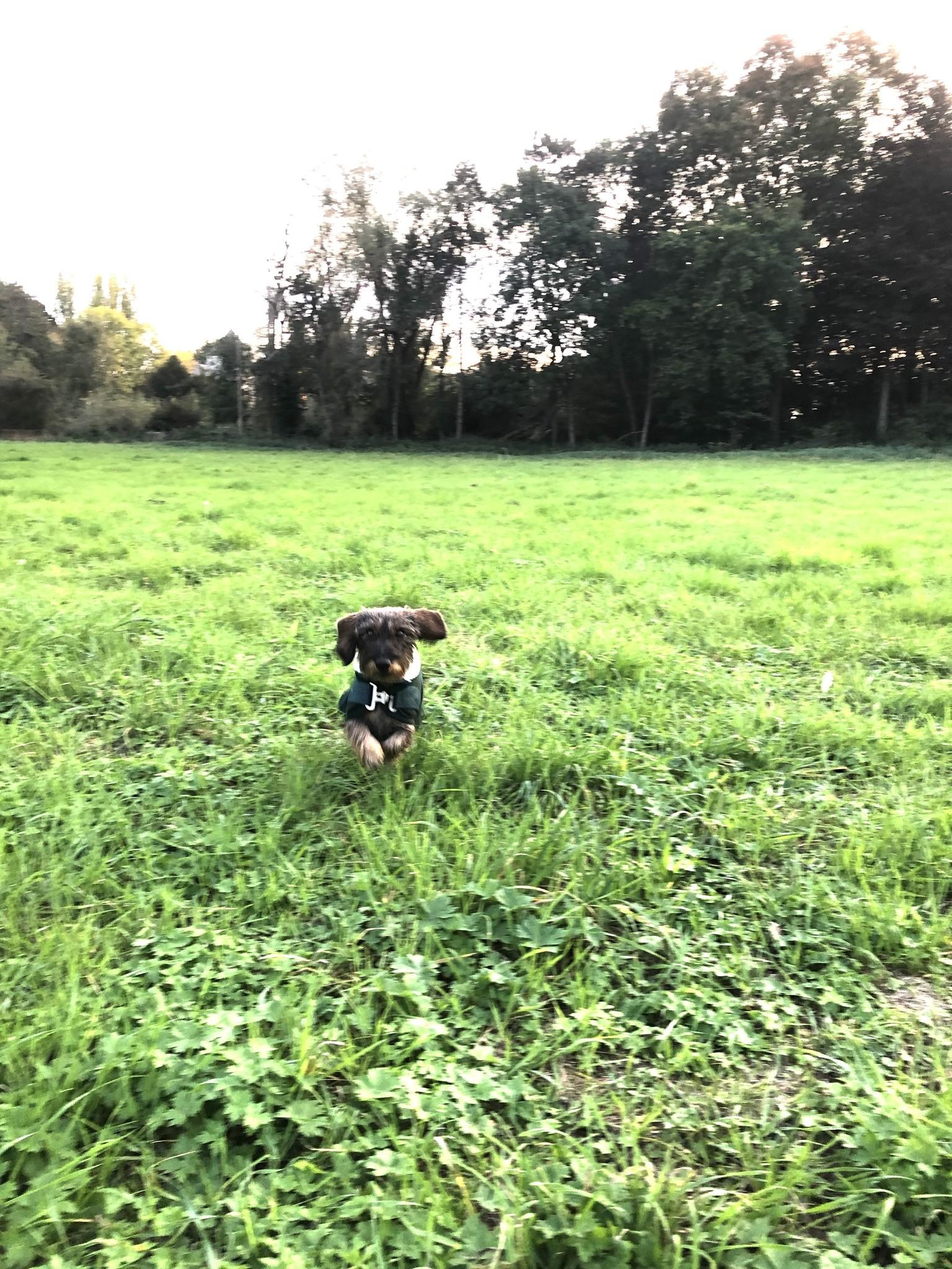 Greenfield Selection HD4 - Hondendeken fleece teddy kraag