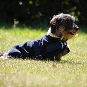 Dog rug  fleece with teddy collar