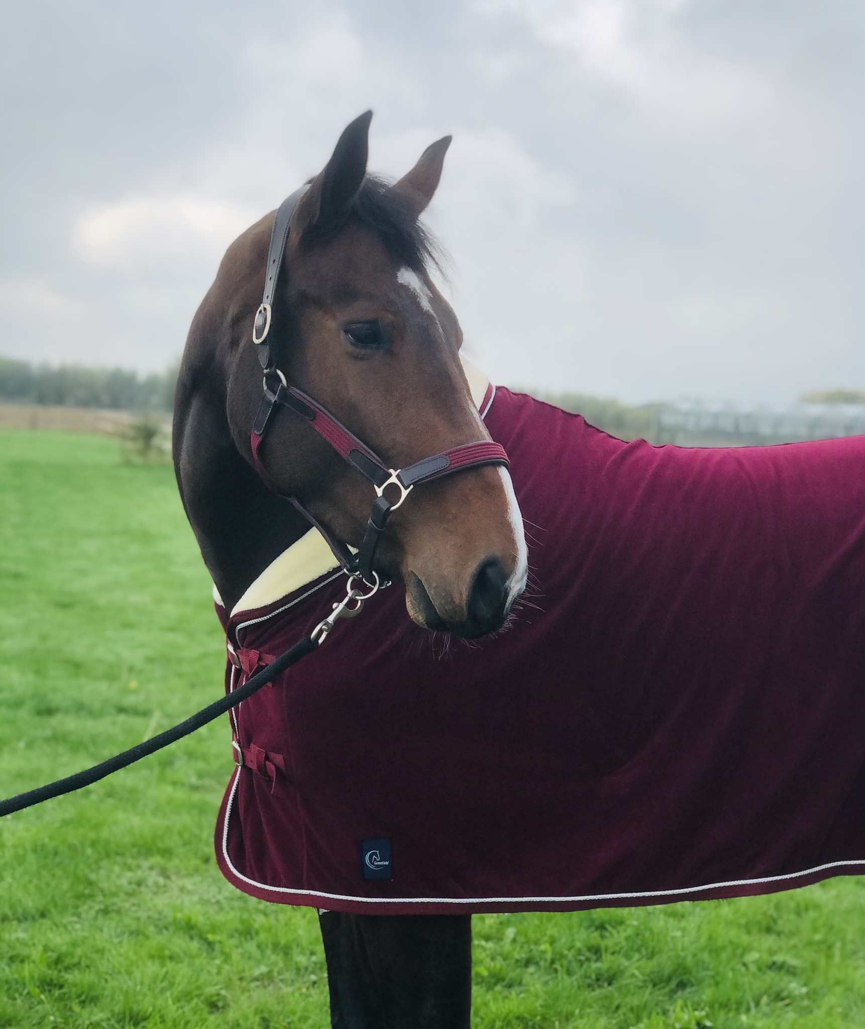 Greenfield Selection Leather headcollar with fabric - burgundy