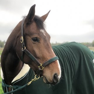 Greenfield Selection Leather headcollar with fabric - green