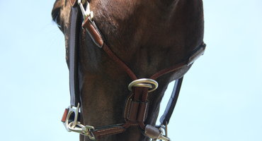 Product in the picture: Grooming halter