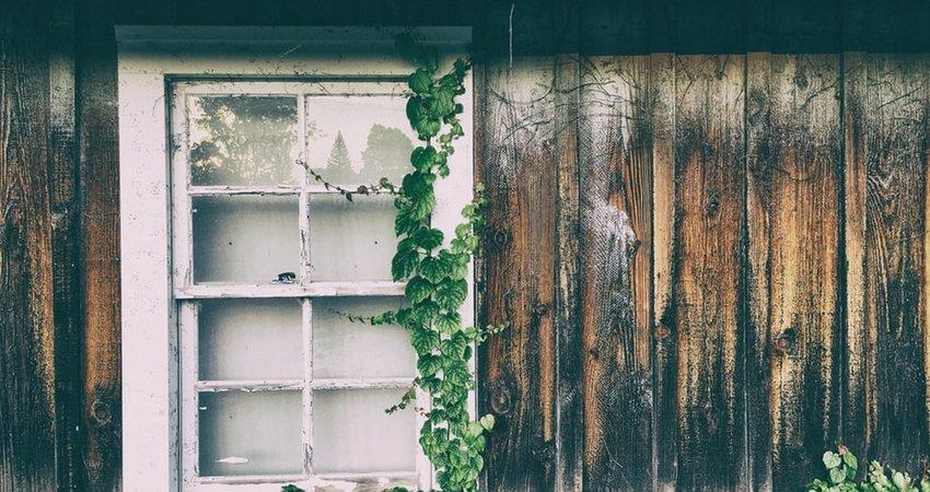 Schimmel voorkomen op hout