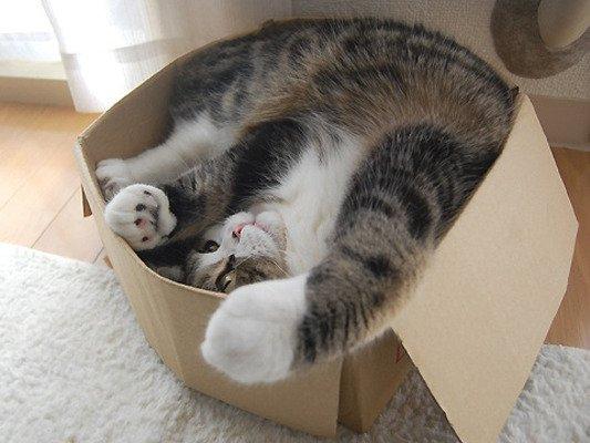 Katten en dozen