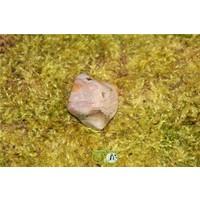 thumb-Oceaan Oogjes Jaspis OOJ-RM-10-23-2