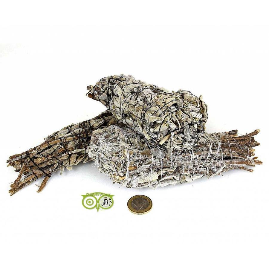 Griekse Salie Smudge sticks (Salvia Fruticosa)-2