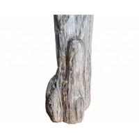 thumb-Versteend hout - volledig gepolijst - Java  30,4 kg-6