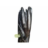 thumb-Orthoceras sculptuur 10.5 kilogram-1