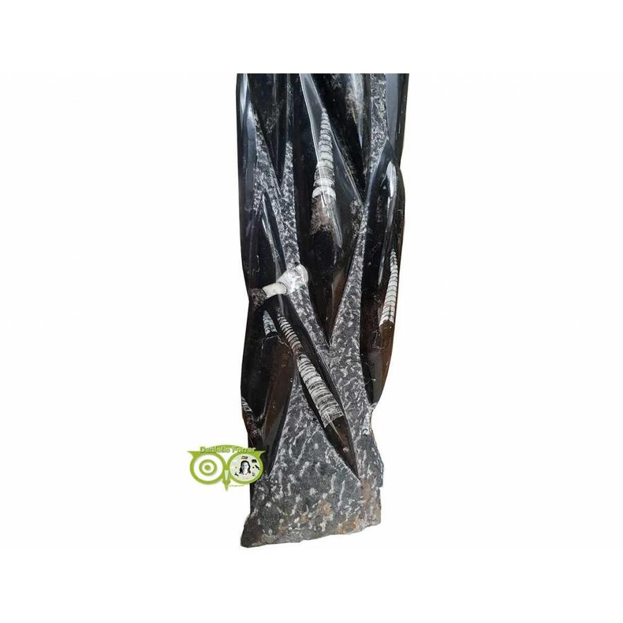 Orthoceras sculptuur 10.5 kilogram-4