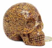 Coquina Jaspis | Sanskrit Stone | Fossiel 'slangen' Jaspis kristallen schedel | Edelestenen webwinkel - Webshop Danielle Forrer