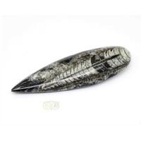 thumb-Orthoceras Fossiel geslepen Nr 2 - 105 gram-1