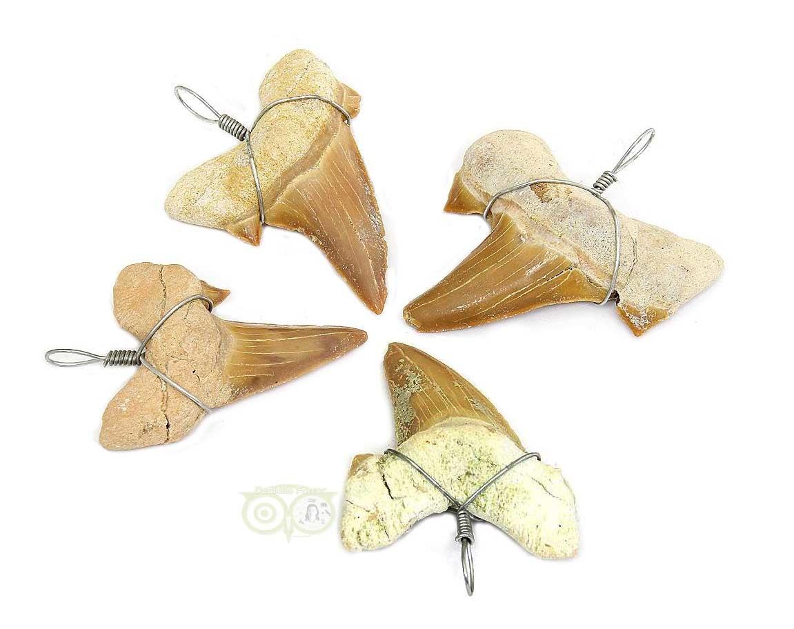 Fossiele haaitentand hangers | Edelstenen Webwinkel - Webshop Danielle Forrer